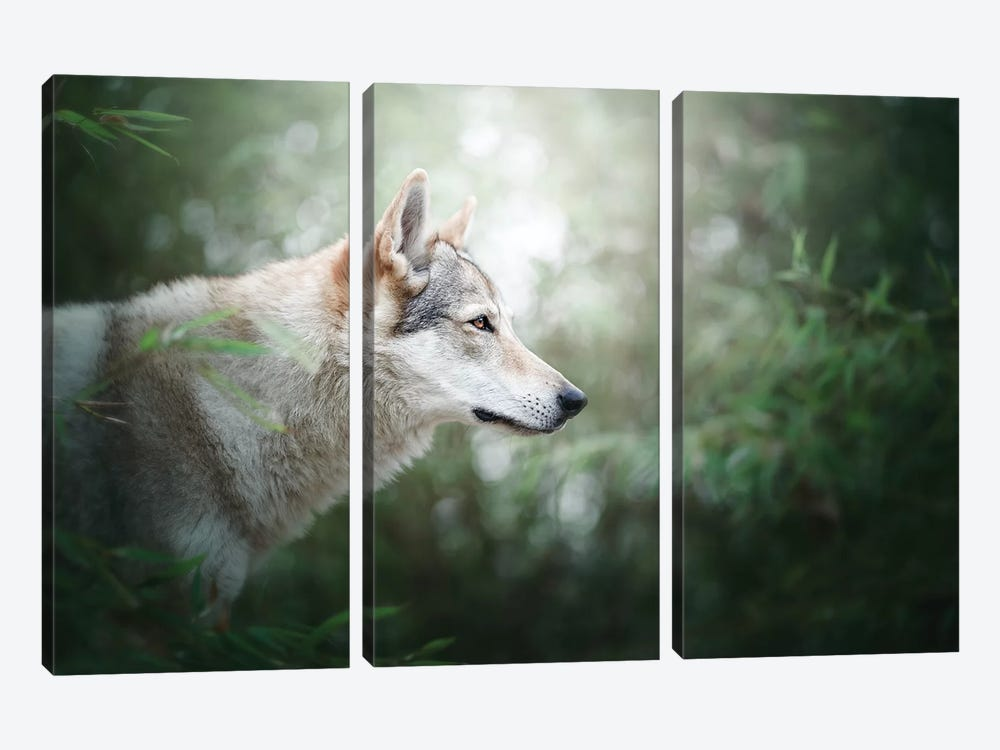 The Wolfdog by Cecilia Zuccherato 3-piece Canvas Print
