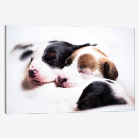 Puppiness 3-Piece Canvas #CZU89} by Cecilia Zuccherato Canvas Art Print