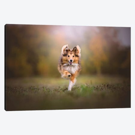 Run Baby Run Canvas Print #CZU90} by Cecilia Zuccherato Canvas Wall Art