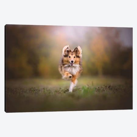 Run Baby Run Canvas Print #CZU90} by Cecilia Zuccherato Canvas Wall Art