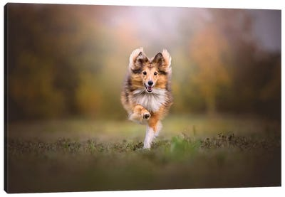Run Baby Run Canvas Art Print