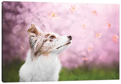 Spring Blossom Canvas Art Print
