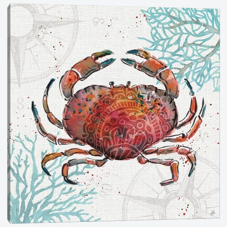 Ocean Finds II Canvas Print #DAB142} by Daphne Brissonnet Art Print