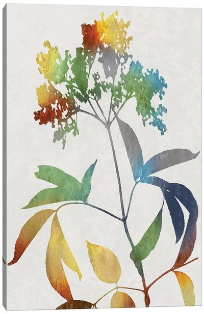 Colorful Nature V Canvas Art Print