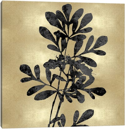Nature Black On Gold II Canvas Art Print