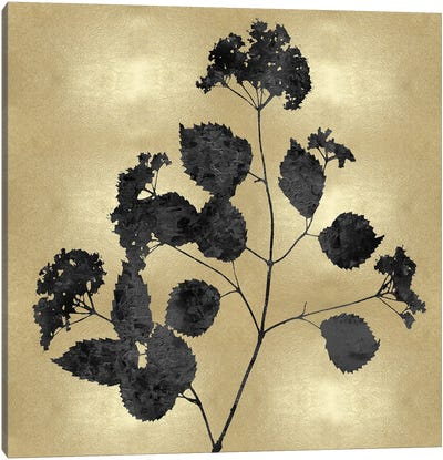 Nature Black On Gold VI Canvas Art Print