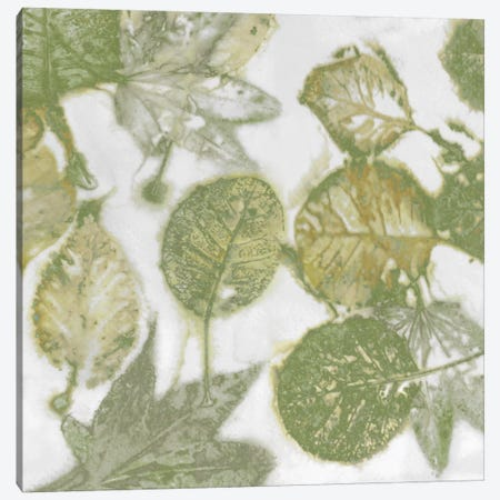Green Leaves II Canvas Print #DAC60} by Danielle Carson Canvas Art Print