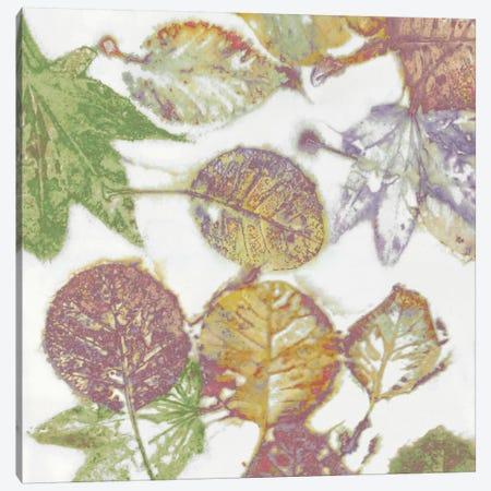 Multi-Colored Leaves II Canvas Print #DAC66} by Danielle Carson Canvas Wall Art