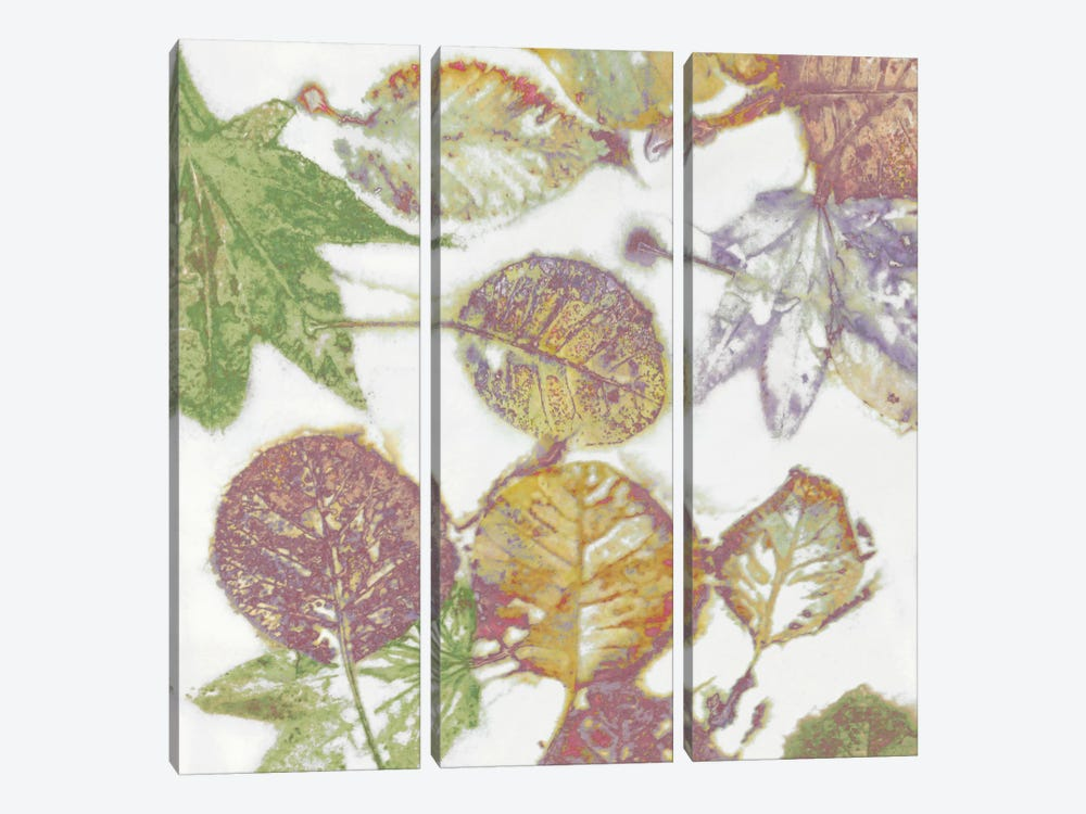 Multi-Colored Leaves II by Danielle Carson 3-piece Canvas Print