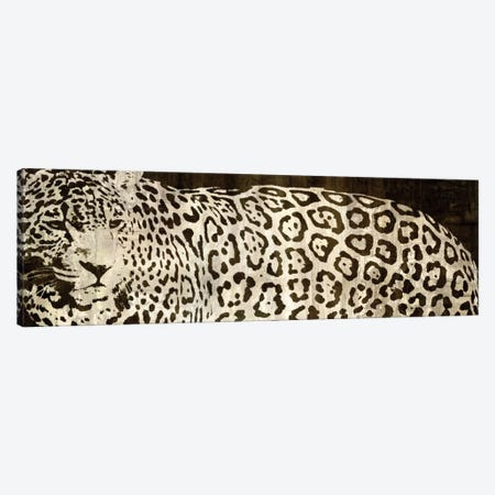 Leopard Encounter Canvas Print #DAD1} by Darren Davison Art Print