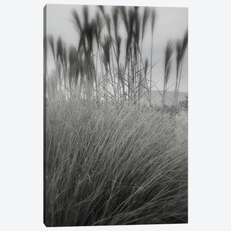 Landscape Photography CLXXX Canvas Print #DAG41} by DAG, Inc. Canvas Art Print