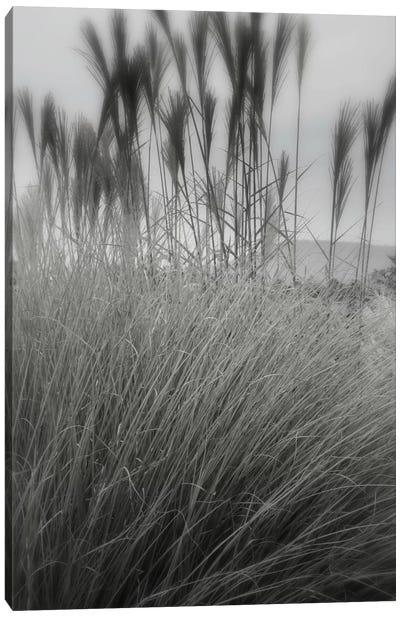 Landscape Photography CLXXX Canvas Art Print