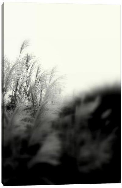 Landscape Photography CLXXXI Canvas Print #DAG42