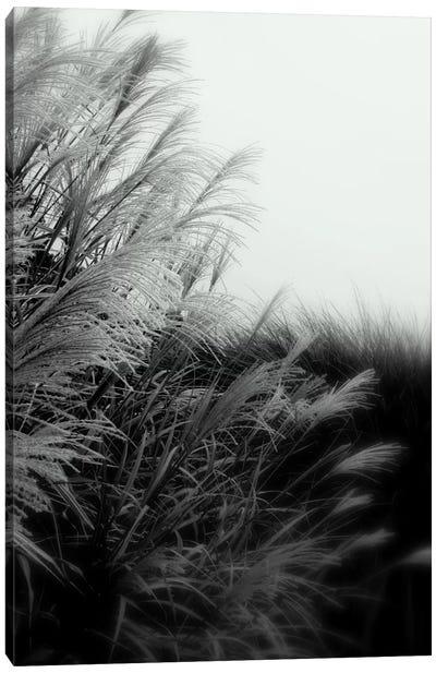 Landscape Photography CLXXXII Canvas Print #DAG43