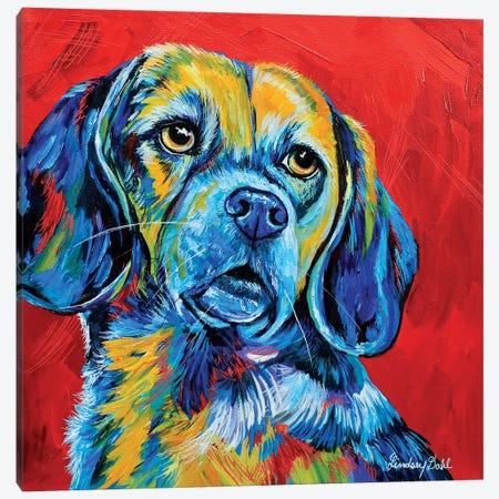 Beagle Canvas Print #DAL163} by Lindsey Dahl Canvas Art