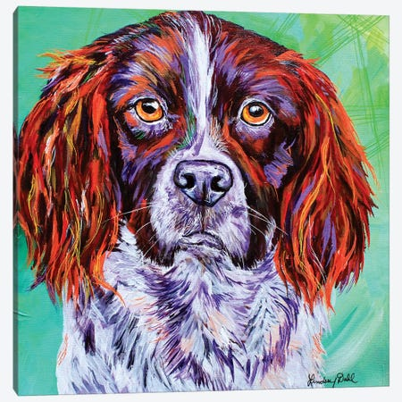 Springer Spaniel  Canvas Print #DAL172} by Lindsey Dahl Art Print