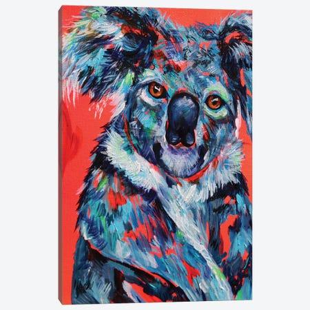 Koala Canvas Print #DAL55} by Lindsey Dahl Canvas Artwork