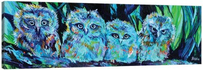 Owlet Blues Canvas Art Print
