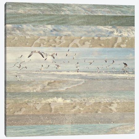 Flying Beach Birds I Canvas Print #DAM20} by Dan Meneely Art Print