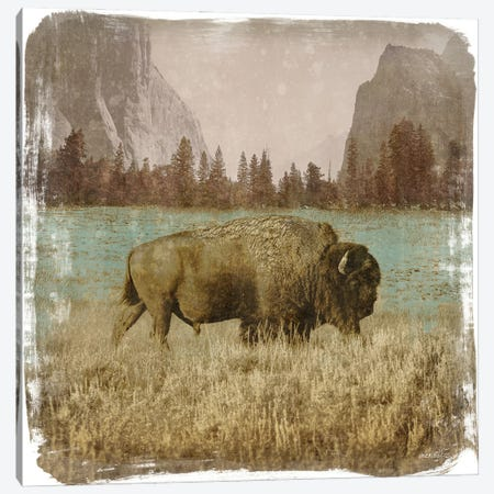 Bison in the Park Canvas Print #DAM83} by Dan Meneely Canvas Print