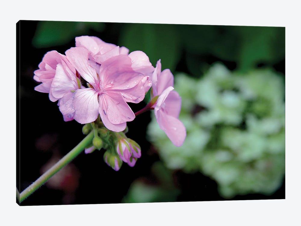Tiny Pink Geranium by Darlene Watson 1-piece Canvas Print