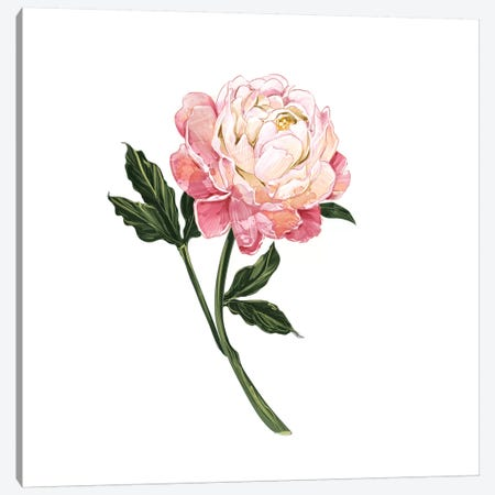 Peony Canvas Print #DAY36} by Amber Day Canvas Art Print