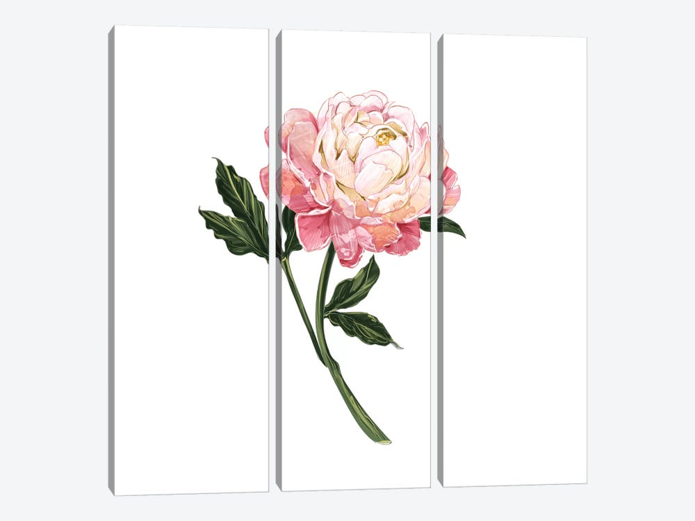 Peony by Amber Day 3-piece Art Print