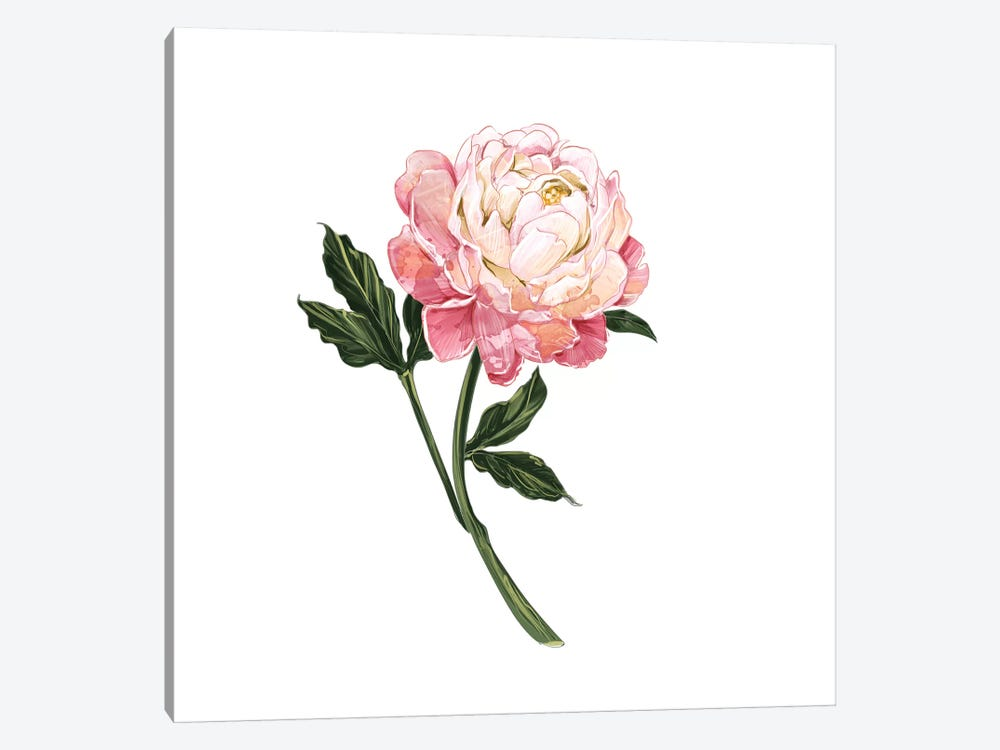 Peony by Amber Day 1-piece Canvas Print