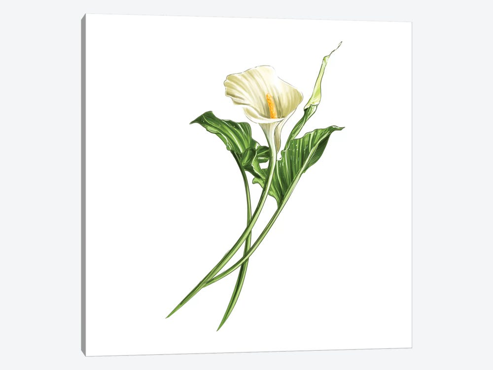 Calla Lily by Amber Day 1-piece Canvas Print