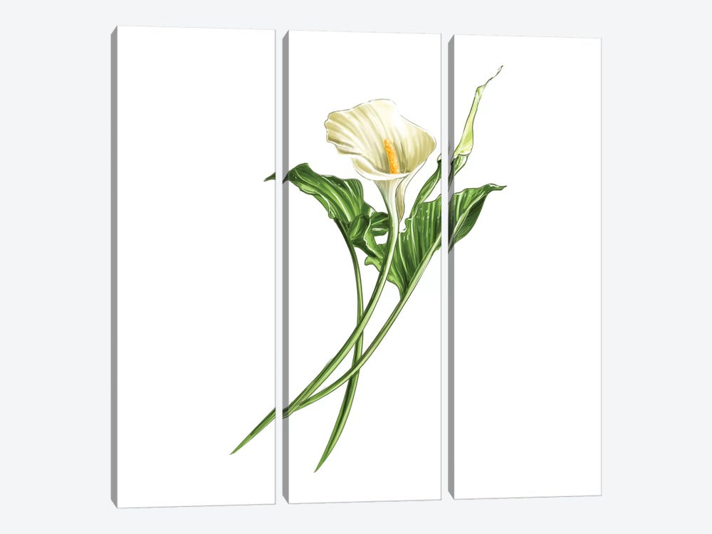 Calla Lily by Amber Day 3-piece Art Print