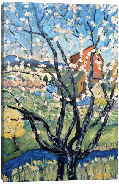 Cherry Tree View Canvas Art Print