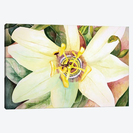 Passionflower Canvas Print #DBH54} by Deborah Eve Alastra Canvas Wall Art
