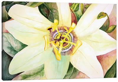 Passionflower Canvas Art Print