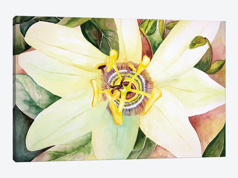 Passionflower by Deborah Eve Alastra 1-piece Canvas Print