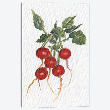 Garden Fresh Radishes Canvas Print #DBK16} by Donna Brooks Art Print