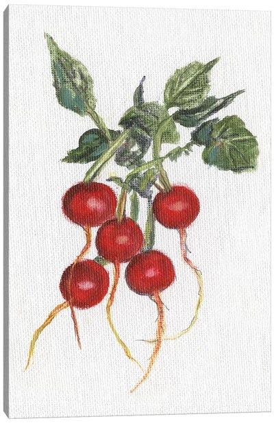Garden Fresh Radishes Canvas Art Print