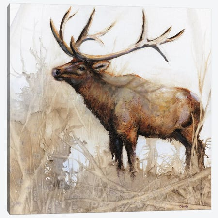 Majestic Moose Canvas Print #DBK2} by Donna Brooks Canvas Print