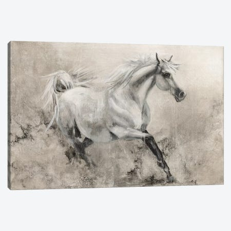 Majestic Stallion I Canvas Print #DBK3} by Donna Brooks Canvas Print