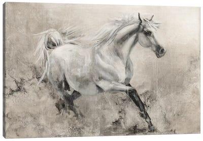 Majestic Stallion I Canvas Art Print