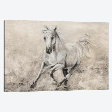 Majestic Stallion II Canvas Print #DBK4} by Donna Brooks Canvas Artwork