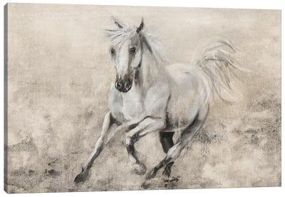 Majestic Stallion II Canvas Art Print