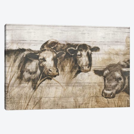 Sepia Cows Canvas Print #DBK5} by Donna Brooks Canvas Art
