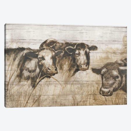 Sepia Cows Canvas Print #DBK5} by Donna Brooks Canvas Art