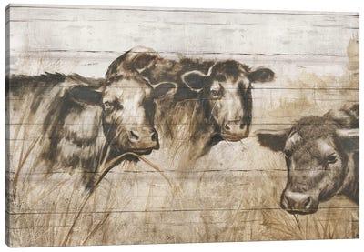 Sepia Cows Canvas Art Print