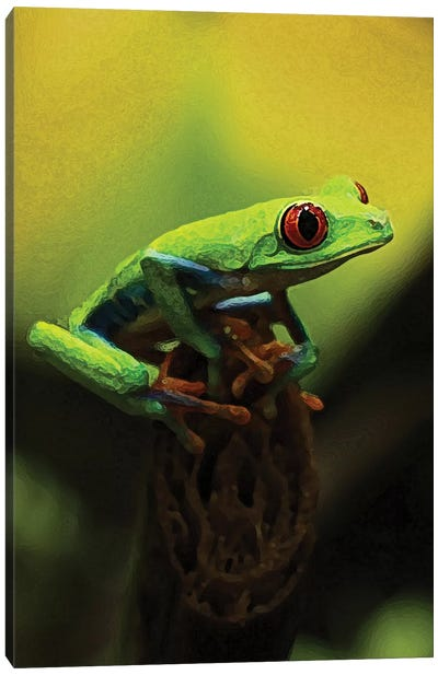 Tree Frog Canvas Art Print
