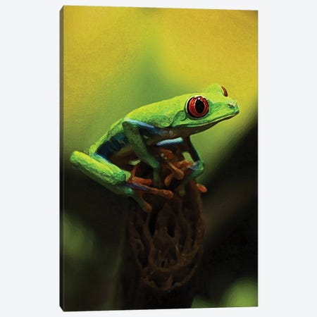 Tree Frog Canvas Print #DBM100} by Dana Brett Munach Art Print