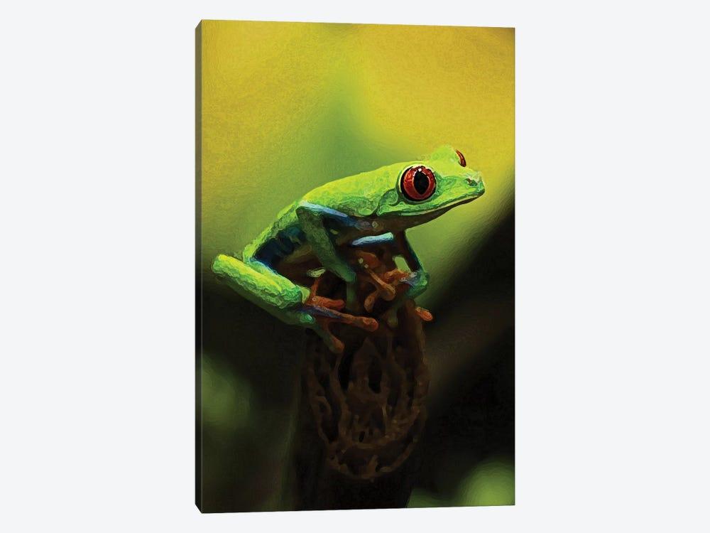 Tree Frog by Dana Brett Munach 1-piece Canvas Art Print