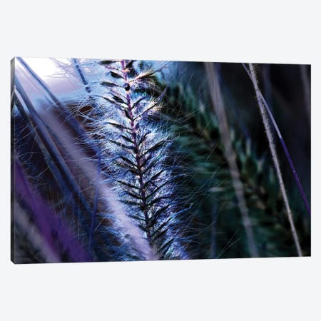 Willow 3-Piece Canvas #DBM108} by Dana Brett Munach Art Print