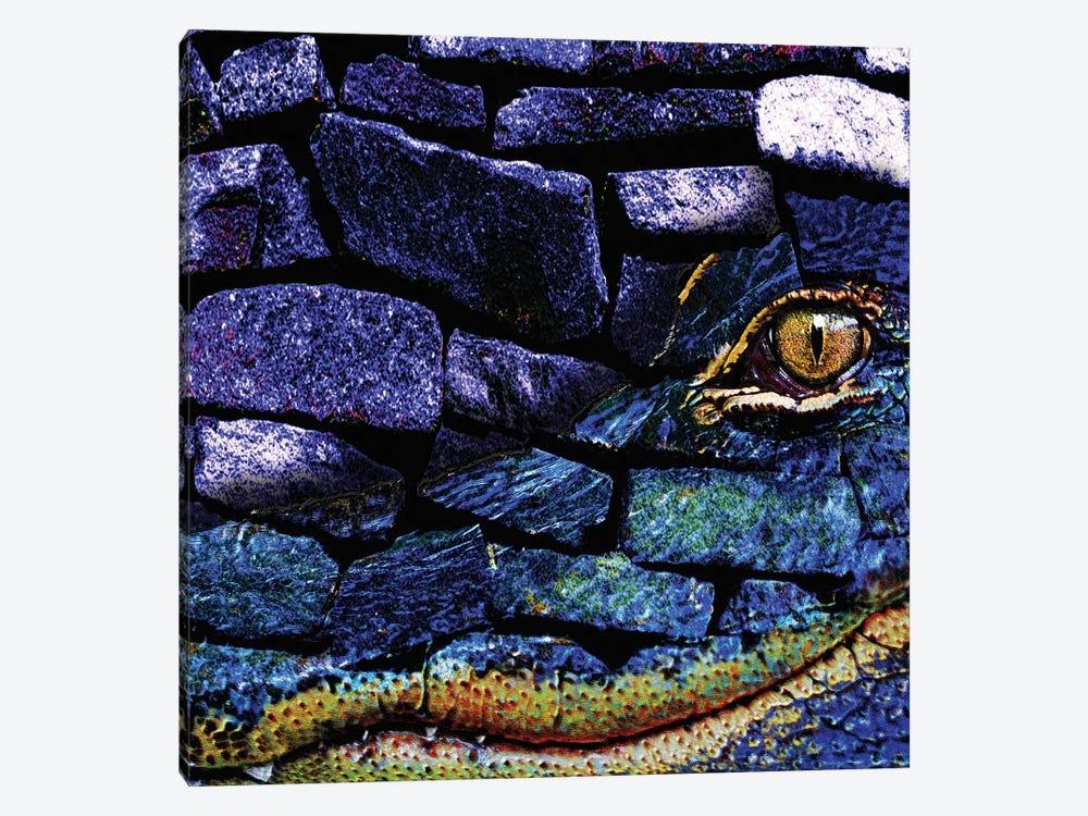 Cayman Rocks by Dana Brett Munach 1-piece Canvas Art