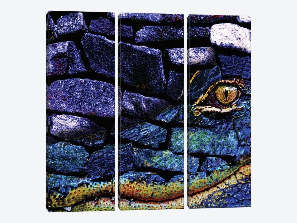 Cayman Rocks by Dana Brett Munach 3-piece Canvas Wall Art